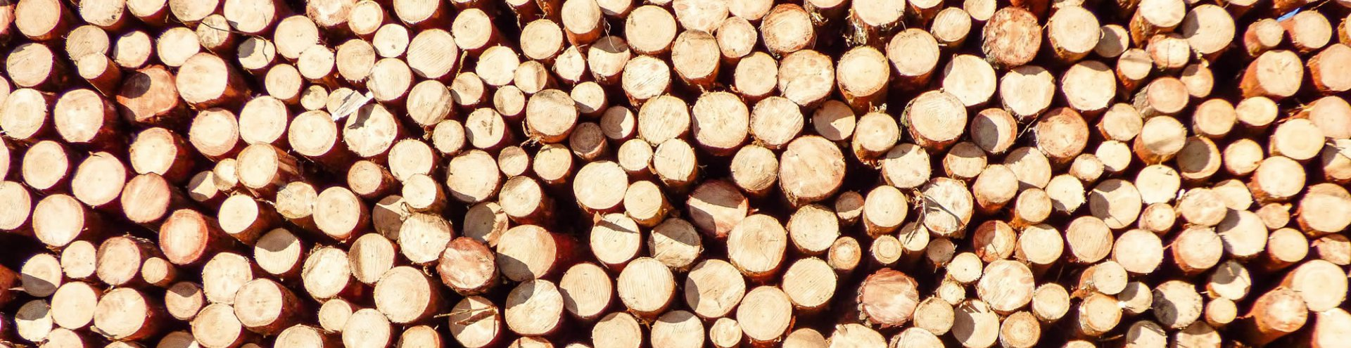 Timber Suppliers | Log Stack | Ryder Services
