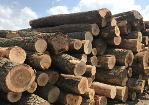 Timber & Construction Supplies | Log Stack | Hardwood | Ryder Services